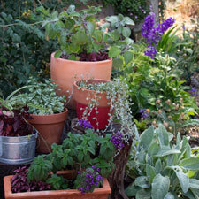 Shade Garden Containers