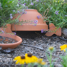 Toad House in Garden
