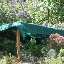 Flat with shade cloth for transplanting  during hot weather