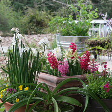 Container Gardening - Spring Flowers & Bulbs
