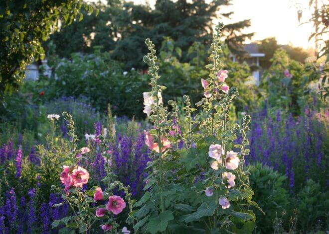Spring Flower Garden - Hollyhocks and Larkspur