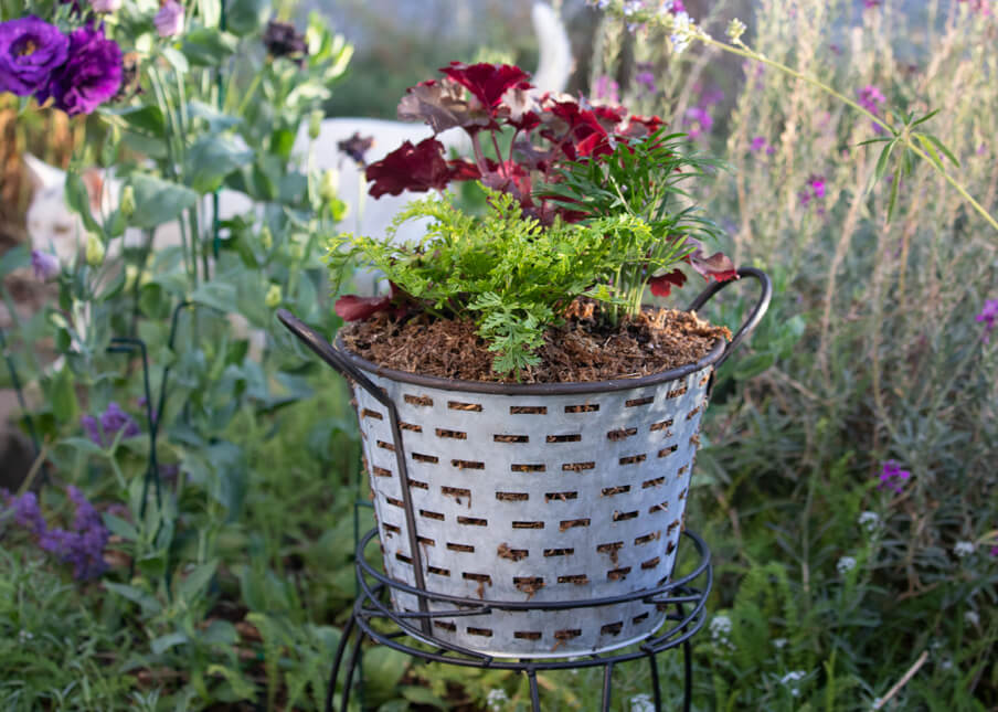 Container Gardening in Metal Basket with Heuchera, Rabbit Foot's Fern and Neanthebella Palm