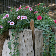 Flowers planted in tree stump